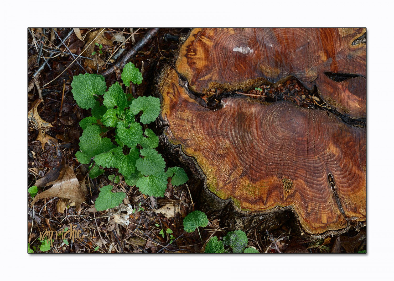stump_3382_lg
